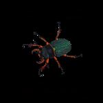 11_17 beetle Tshirt LH