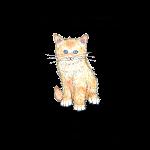 11_17 cat Tshirt LH