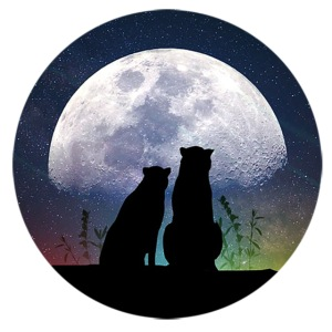 wolves looking at the moon