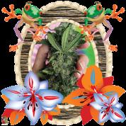 Tropical Marijuana T Shirt 12 OZ Bud