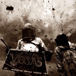 VV Killer bees