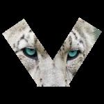 Snow Leopard (TOP) - TRILLESTMIND