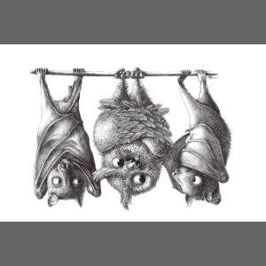 Vampire Owl with Bats