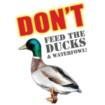 dont-feed-the-ducks.png