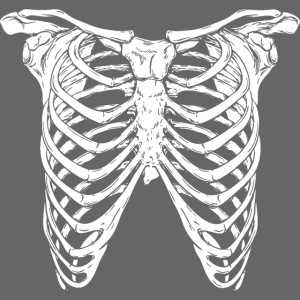 ribs skeleton skull