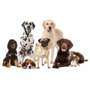 German shepherd puppy dog breed dog
