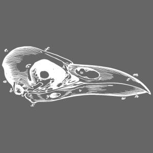 Vintage Bird Skull