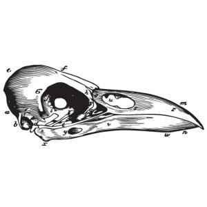 Bird Skull Illustration Vintage Steampunk Style