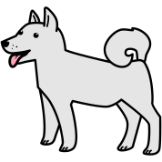white husky dog wolf