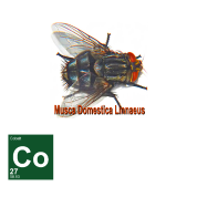 Breaking Bad Fly Contaminant