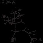 Darwin I Think Tree (black)