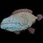 Big Fish 1
