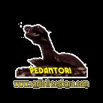 shirt_pedantor