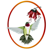 Red Throated Hummingbird Oval