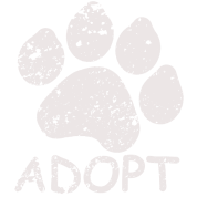 Adopt a Pet in Need