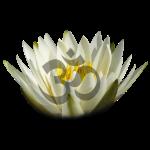 om lily