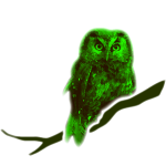 owl bird fowl green