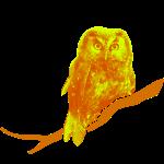 owl bird fowl orange yellow