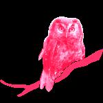 owl bird fowl pink