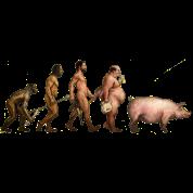 men evolution