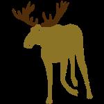 stag deer moose elk antler antlers cerf bois