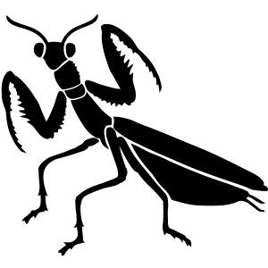 praying mantis bug insect