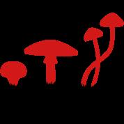 Mushrooms, psilocybin food killing flies