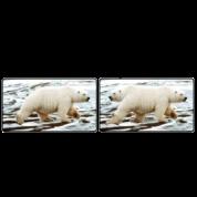 Polar Bear, Bi-Polar Bear