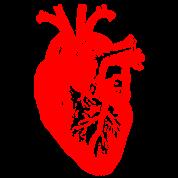 I love / I heart heart anatomy