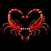 Loving Scorpions