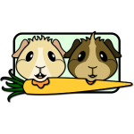 Guinea Pigs & Carrot