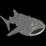 save the whale shark sharks fish dive diver diving endangered species