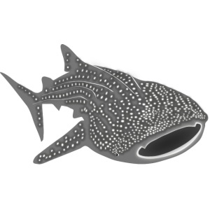 save the whale shark sharks fish dive diver diving