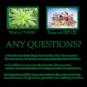 Plant VS Drugs