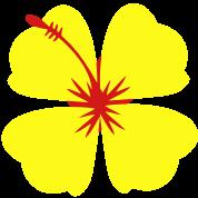 single hibiscus tropical flower