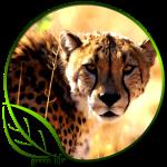 Green Life Cheetah