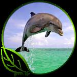 Green Life Dolphin