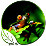 Green Life Tree Frog