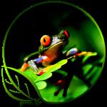 Green Life Treefrog