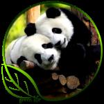 Green Life Panda's