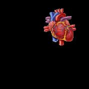 I *heart* Biology