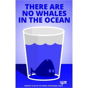 Whales in the Ocean Ptermclean peter mclean