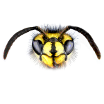 wasp color