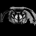 Waspface greyscale
