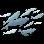 Beluga Whales Shirts Light