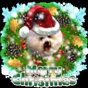 Merry Christmas Bichon Frise