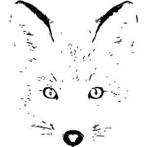 polar fox foxy eyes cat wild shape
