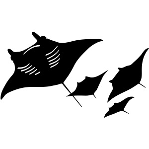 manta ray sting scuba diving diver dive