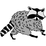raccoon coon racoon bear animal forest cute