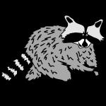 raccoon coon racoon bear animal forest cute